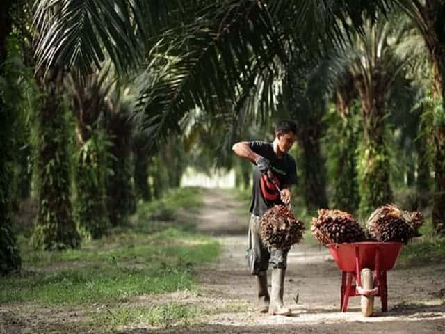 SMART Perkebunan kelapa sawit